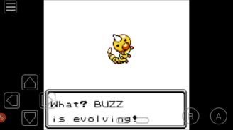 Buzz evolving